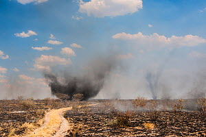 Bushfire and dust devils in the Central Kalahari Game Reserve, Botswana, November - Roy Mangersnes