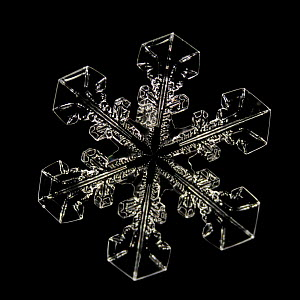 Snowflake magnified under microscope, Lilehammer, Norway  -  Solvin Zankl