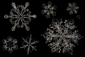 Different Snowflakes showing range in size and pattern, magnified under microscope, from Lilehammer, Norway. Digital composite - Solvin Zankl