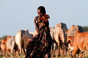 A young Orma man herds cattle, Tana River Delta, Kenya, East Africa 2011. No release available.  -  Cheryl-Samantha Owen