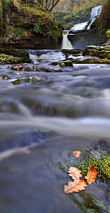 Sgwd Isaf Clun-gwyn waterfall and rapids. Ystradfellte, Brecon Beacons National Park, Wales, November 2011.  -  Andy Rouse / 2020VISION