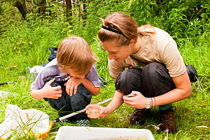 Woman and boy looking in jar whilst pond dipping on a Froglife reptile and amphibian walk, Palacerigg Country Park, Cumbernauld, North Lanarkshire, Scotland, UK, July 2011. 2020VISION Book Plate.  -  Katrina Martin / 2020VISION