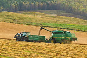 Harvesting barley crop in late summer, Scotland, UK - Mark Hamblin / 2020VISION