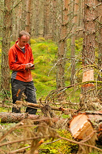 RSPB staff warden taking records of trees felled in plantation as part of management programme to create open woodland habitat, RSPB Abernethy Forest Reserve, Cairngorms National Park, Scotland, UK, S... - Mark Hamblin / 2020VISION