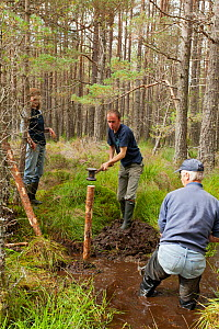RSPB staff and volunteers building a natural dam to create area of wet woodland, RSPB Abernethy Forest Reserve, Cairngorms National Park, Scotland, UK, September 2011, model released - Mark Hamblin / 2020VISION