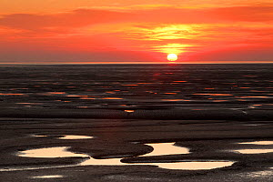Sunset reflected from mudflats. The Wash Estuary, Norfolk, October 2011.  -  Peter Cairns / 2020VISION
