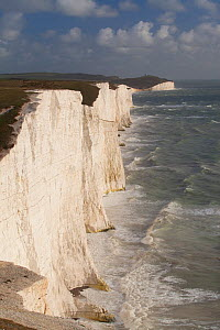 Seven Sisters chalk cliffs, South Downs, England.  -  Peter Cairns / 2020VISION