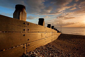 Breakwater on pebble beach at dawn. Selsey, England, November 2011. Did you know? Sir Patrick Moore lived in Selsey for 44 years.  -  Peter Cairns / 2020VISION