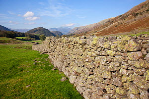 Dry stone wall and sheep fold. Helvellyn, Lake District National Park, Cumbria, September 2011. - Peter Cairns / 2020VISION