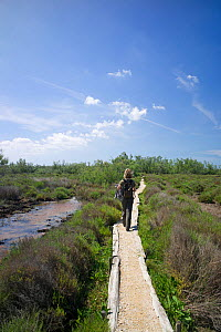 Woman walking along path through nature trail, Salin de Badon, Camargue Nature Reserve, France, Model Released, May 2012  -  Rob Cousins