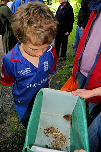 Boy looking at a Bank vole (Myodes glareolus) live-trapped during a Bioblitz survey at Abbots Pool and woodland reserve, Bristol, UK, June 2012. Model released.  -  Nick Upton / 2020VISION