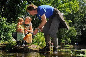 Family pond dipping and inspecting their catch, with other pond-dippers in the background during Abbots Pool and woodland reserve Bioblitz, Bristol, UK, June 2012. Model released.  -  Nick Upton / 2020VISION