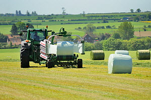 Mechanised haylage harvesting, tractor with appliance for wrapping haylage bales in plastic, Norfolk, UK, May - Gary K. Smith