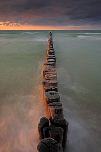 Line of Wooden posts running into the Baltic Sea, at dusk, National ParkVorpommersche Boddenlandschaft, Germany, May  -  Sandra Bartocha