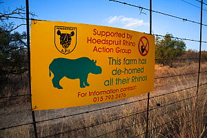 Sign on game farm perimeter fence to deter rhino poachers explaning rhinos there have been dehorned, Hoedspruit, Limpopo, South Africa, June 2012. Editorial use only. - Ann & Steve Toon