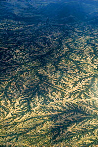 Dendritic drainage of the land at the end of the rainy season, a view from the air. Northern Kenya, Africa, November. - Graham Eaton