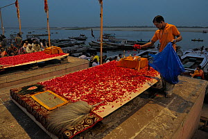 Man preparing for the ceremony of Aarti poooja, a prayer to thank the holy Ganges river, on the famous ghats of Varanasi / Benares, India 2012  -  Loic Poidevin