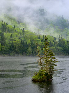 Mist over forest around lake, Jacques Cartier ParK,  Quebec, Canada, May 2012  -  Loic Poidevin