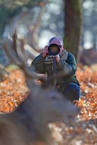 Wildlife photographer Tony Heald photographing Red deer in Richmond Park, London, UK January 2012. Model released.  -  Matthew Maran