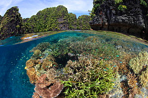 Split-level view of healthy coral reef amidst the stunning beauty of the Raja Ampat island archipelago, eastern Indonesia.  -  Brandon Cole