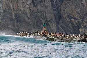 Monument to Chilean Lt. Luis Pardo who rescued the survivors of the Shackleton Expedition, surrounded by penguins, Point Wild, Elephant Island, South Shetland Islands, Antarctic Peninsula, Southern Oc...  -  Konrad Wothe