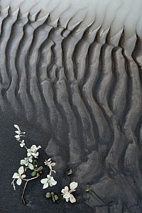 Abstract patterns of mud by the river Jokulsa a Fjollum, Iceland, August 2010 - Erlend Haarberg