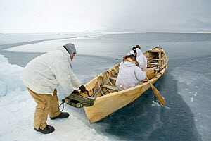 Inupiaq subsistence whalers get into their umiak - or bearded seal skin boat - in order to break thin ice forming in the open lead, allowing for passing bowhead whales during spring whaling season. Ch...  -  Steven Kazlowski