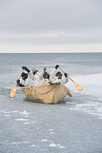 Inupiaq subsistence whalers paddle their umiak - or bearded seal skin boat - and break thin ice forming in the open lead, allowing for passing bowhead whales during spring whaling season. Chukchi Sea,...  -  Steven Kazlowski