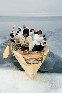 Inupiaq subsistence whalers bring their umiak - bearded seal skin boat - back onto the edge of an open lead in the pack ice, during spring whaling season. Chukchi Sea, offshore from Barrow, Arctic coa...  -  Steven Kazlowski