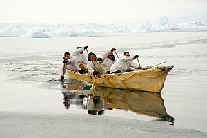 Inupiaq subsistence whalers paddle their umiak, or bearded seal skin boat, to find passing bowhead whales traveling through the open lead, during spring whaling season. Chukchi Sea, offshore from Barr...  -  Steven Kazlowski