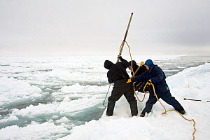 Inupiaq subsistence whalers break open a hole in the pack ice using a harpoon along the edge of an open lead, during spring whaling season, Chukchi Sea, offshore from Barrow, Arctic coast of Alaska  -  Steven Kazlowski