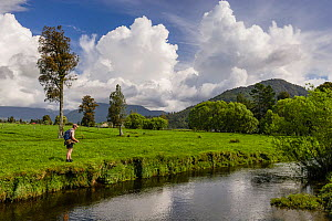 A fly fisherman (Paul van Klink) fishing for brown trout (Salmo trutta) on a small spring creek running through farmland. Here the fisherman is fishing 'blind', drifting a weighted nymph through likel...  -  Andy Trowbridge