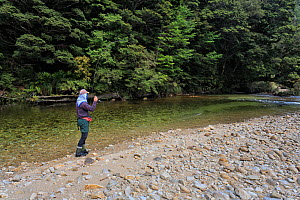 Fly fisherman (Paul van Klink) hooking a lively brown trout (Salmo trutta) in a clear 'backcountry' river, Ugly River, Kahurangi National Park, Buller District, South Island, New Zealand. December, 20...  -  Andy Trowbridge