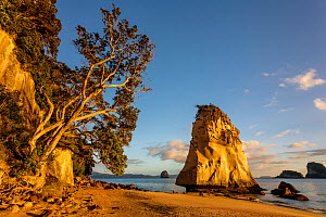 Cathedral Cove just after sunrise, Hahei, Coromandel Peninsula, Thames-Coromandel District, Waikato Region, New Zealand. November, 2006. - Andy Trowbridge