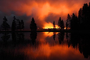 Forest fire at night with silhouetted trees, Yellowstone National Park, Wyoming, USA - Mark Taylor
