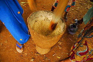 Women pounding grain in a mortar by hand, Bassari country, located east Senegal. This area became a UNESCO World Heritage site in 2012, for cultural landscape and traditions kept by the the Bassari, F... - Enrique Lopez-Tapia