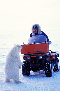 Polar bear (Ursus maritimus) curious spring cub checks out a local elder in snow vehicle outside the arctic village of Kaktovik, Barter Island, 1002 area of the Arctic National Wildlife Refuge, North...  -  Steven Kazlowski