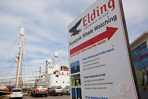 Promotions for whale and seabird watching tours from Reykjavik harbour, Iceland, June 2011  -  Peter Cairns