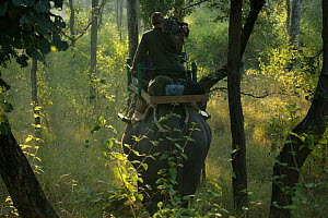 Wildlife cameraman riding on the back of Indian elephant (Elephas maximas), Pench NP, India, taken on location for 'Tiger - Spy in the Jungle'. December 2006  -  John Downer