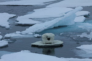 'Iceberg cam' remote camera used for filming polar bears, Svalbard, Norway, taken on location for 'Polar Bear : Spy on the Ice' August 2010  -  John Downer