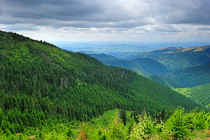 View of forests of the Leota mountain range, Arges county, Carpathian Mountains, Romania, July, 2011  -  Wild Wonders of Europe / Bartocha