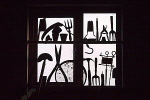 Garden tools silhouetted in potting shed window. September, UK.  -  Ernie Janes