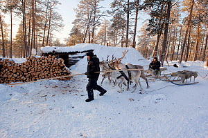 Selkup hunters returning by reindeer sled to their 'Poymot' (traditional Selkup turf hut) at a winter hunting camp in the forest near Ratta,  Krasnoselkup, Yamal, Western Siberia, Russia 2012 - Bryan and Cherry Alexander