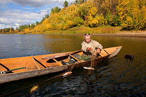 On an autumn day, Gennadiy Kubolev, a Selkup man, checks a fishing net from his 'Anty' (traditional dugout boat) on the River Shirta, Krasnoselkup, Yamal, Western Siberia, Russia  -  Bryan and Cherry Alexander