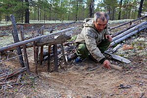 Gennadiy Kubolev, a Selkup hunter, setting a traditional 'chang' (deadfall trap) to catch Capercaille in a forest clearing, Krasnoselkup, Yamal, Western Siberia, Russia - Bryan and Cherry Alexander