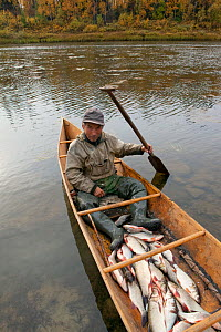 On an autumn day, Gennadiy Kubolev, a Selkup man, returns from fishing in his 'Anty' (traditional dugout boat) on the River Shirta, Krasnoselkup, Yamal, Western Siberia, Russia  -  Bryan and Cherry Alexander