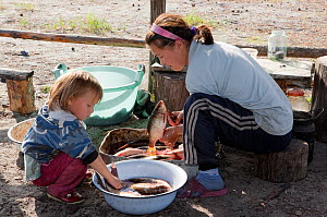 Lena Kuboleva, a young Selkup woman, cleans fish while her niece Anastasia watches, at a summer camp in the forest, Krasnoselkup, Yamal, Western Siberia, Russia  -  Bryan and Cherry Alexander