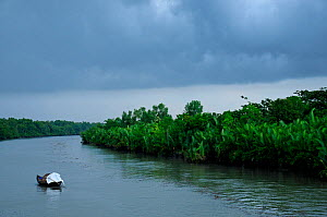 Boat in the Sundarbans National Park, the largest mangrove swamp in the world. Bangladesh, UNESCO World Heritage Site. June 2012. - Enrique Lopez-Tapia