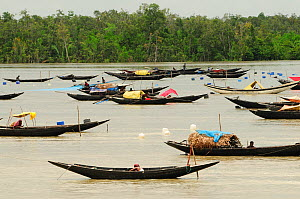 A large number of traditional open boats on a river, the Sundarbans National Park, the largest mangrove swamp in the world. Bangladesh. UNESCO World Heritage Site. June 2012.  -  Enrique Lopez-Tapia