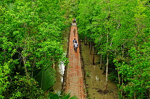 People crossing a raised walkway through a  mangrove swamp. The Sundarbans National Park. UNESCO World Heritage Site. June 2012.  -  Enrique Lopez-Tapia